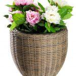 ghivece flori